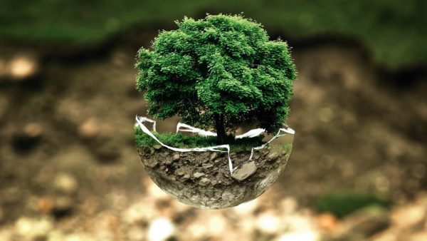 Environmental Analysis – Student Profile Dr Carmel Moran