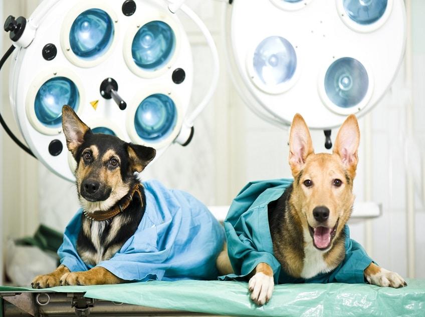 Postgraduate Programs in Veterinary Science