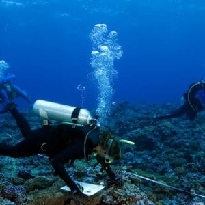 Funding for International MSc In Marine Biology @ GMIT